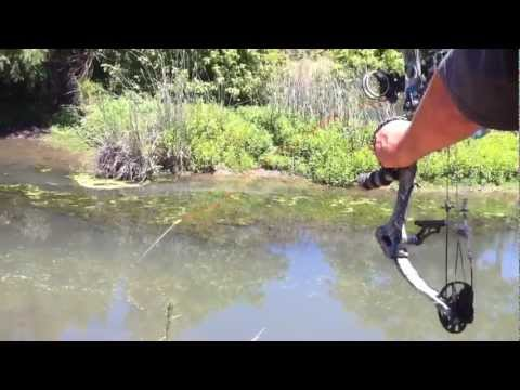 видео охота на карпа