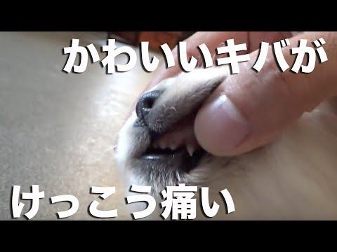 【レポート】歯が生えてきました!