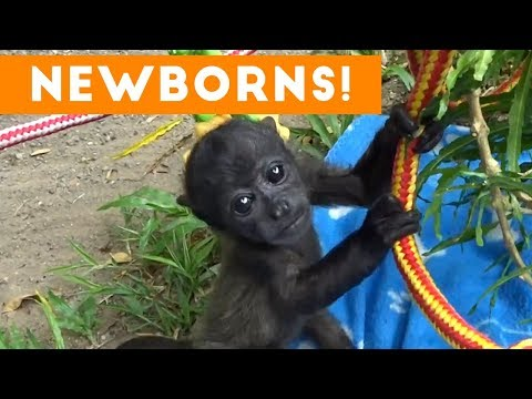 The Cutest Newborn Animals Weekly Compilation 2017 | Funny Pet Videos