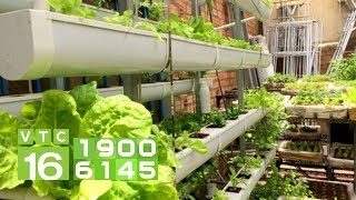 Kỹ thuật trồng rau thủy canh hồi lưu | VTC16