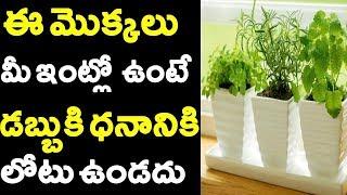 ఈ మొక్క ఇంట్లో ఉంటే డబ్బు బంగారం ఆరోగ్యం మీ వెంటే..! These Plants Bring Lot of Money | Vastu Shastra