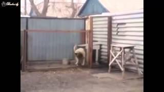 Собака танцует под Modern Talking. Ахаха.