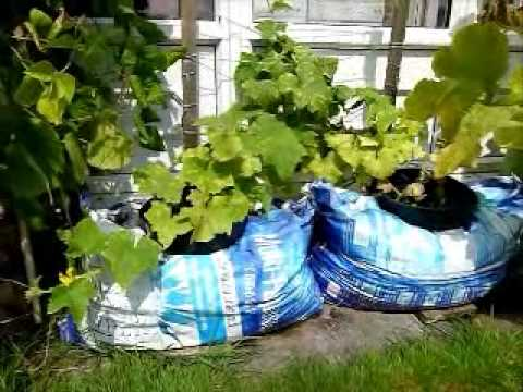 Container Vegetable Gardening Introduction to my container