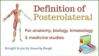Posterolateral Definition (Anatomy, Kinesiology, Medicine)