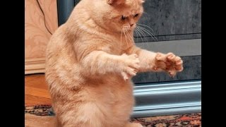 смешные прикольные котята
