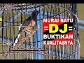 nd Anniversary Ppc Ft Bnr Murai Batu Dj Milik Om Koko Mulai Mengancam  Mp3 - Mp4 Download