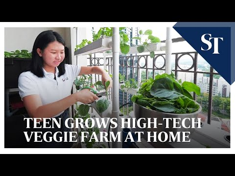 Teen grows sustainable hydroponic farm at home