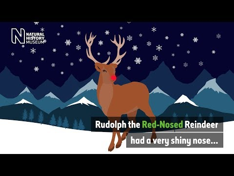 Why does Rudolph have a red nose? | Natural History Museum