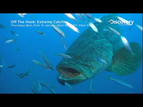 Goliath Grouper | Off The Hook: Extreme Catches 2