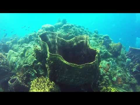 Diving Dominica - Part 1