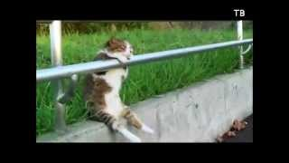 Funniest cats's video