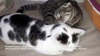 Котики из приюта МИНУТКА РЕЛАКСА И ПОЗИТИВА Милое и доброе видео ФЕЛИНОТЕРАПИЯ