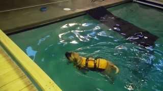 Bogart Goes Swimming