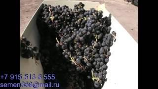 Дробилка для винограда с гребнеотделителем ЛОЗА М