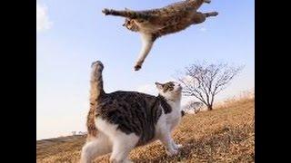 Кот в прыжке Slow mo|замедленная съёмка