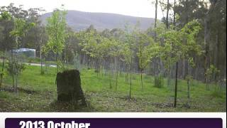 Temperate Food Forest 122 days growth in 3 minutes