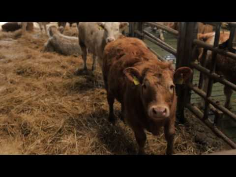 Bank of Ireland supports John Ryan, Beef Farmer