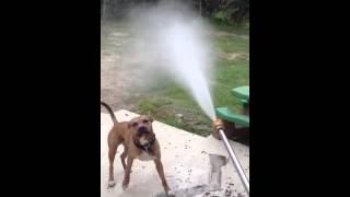 Power washing mom