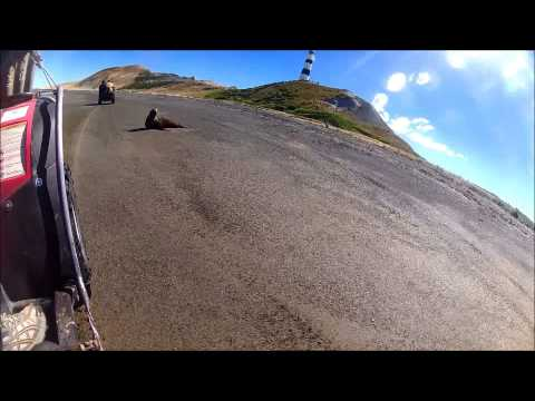 Cape Campbell Diving 29/11/14