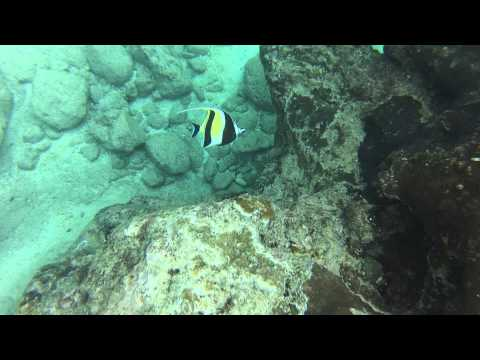 Snorkle Flying Fish Cove CI Aug 13