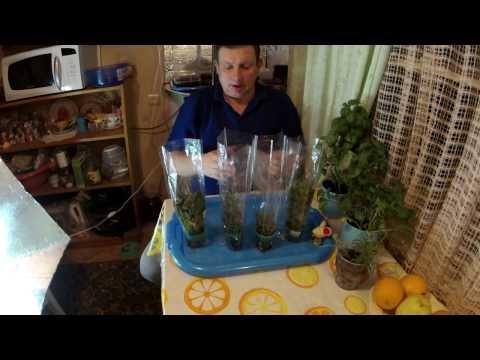 #1 Часть. Травы из супермаркета, розмарин, руккола, базилик, тимьян, шпинат.