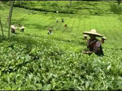 Tripura Tourist Spots Sites Attractions