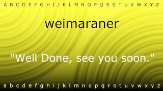 Here I Will Teach You How To Pronounce 'weimaraner' With Zira.mp4