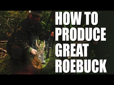 How To Produce Great Roebuck