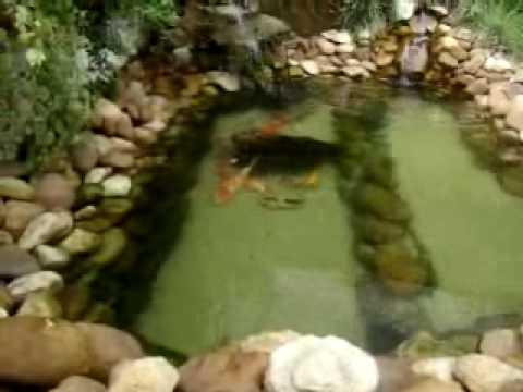 Lago ornamental com carpas e kinguios doovi for Como criar peces koi
