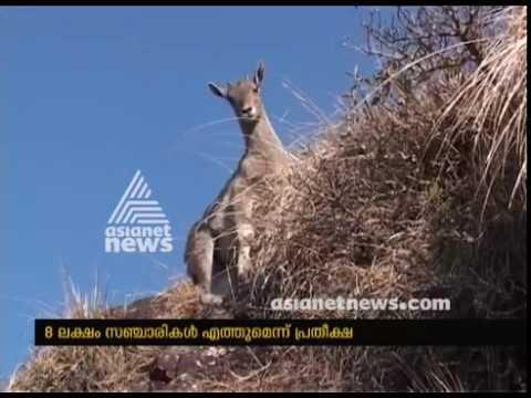 Munnar all set to welcome Neelakurinji flowering season