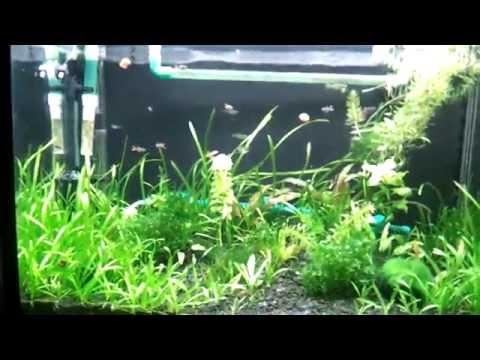 Крышка для аквариума с подсветкой rgd led своими руками