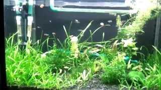 Крышка для аквариума с подсветкой rgd led своими руками(В этом видео показана самодельная крышка для аквариума с разноцветными светодиодными лентами для более..., 2014-09-22T14:52:38.000Z)