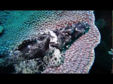 Raja Ampat (Papua, Indonesia) nov 2011 diving cruise
