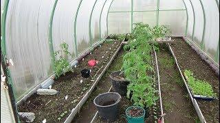 Сезон 2018г. Высадка рассады картофеля и томатов в теплицу на ранний урожай.