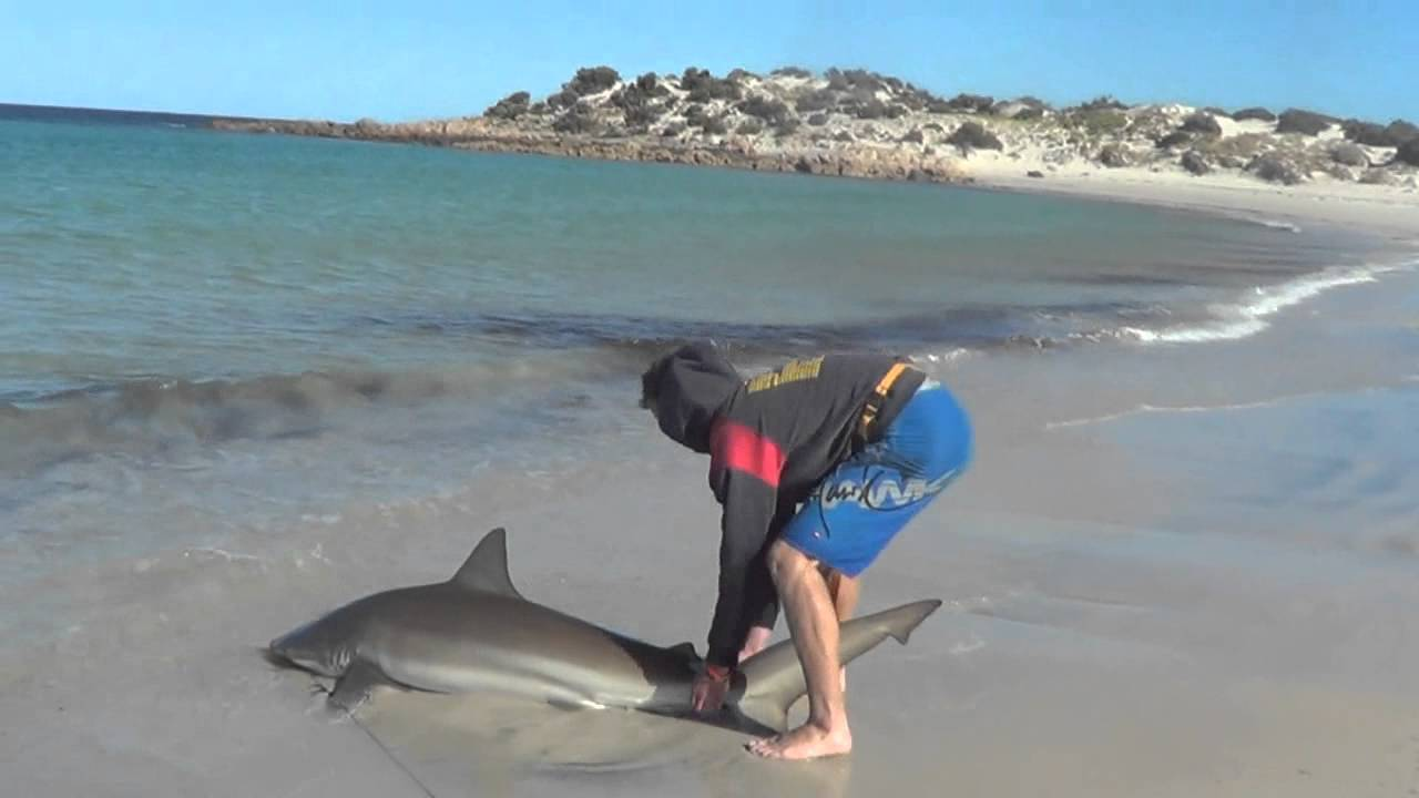 Bronze whaler shark caught off the beach youtube for Shark fishing gear for beach