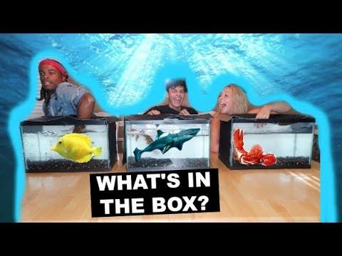 WHAT'S IN THE BOX CHALLENGE! (UNDERWATER EDITION) Ft. GOTDAMNZO