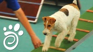 Интеллект Собак (Часть Первая). Все О Домашних Животных