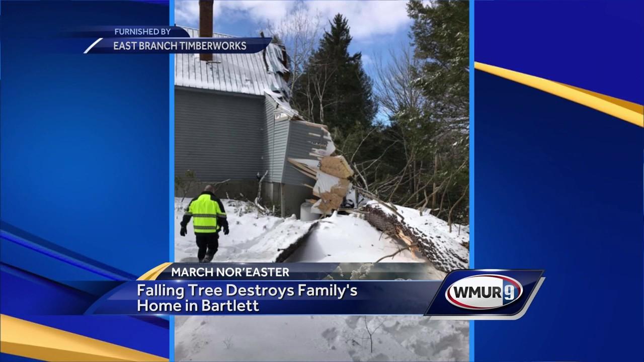 Fallen tree destroys family's house in Bartlett