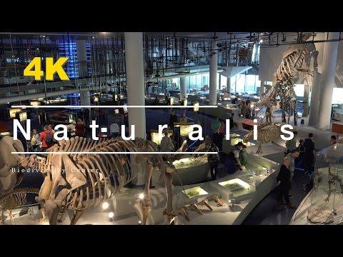4K (UltraHD) Naturalis Leiden 2016