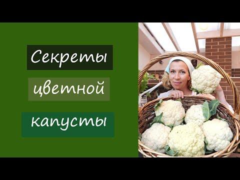 Секреты цветной капусты