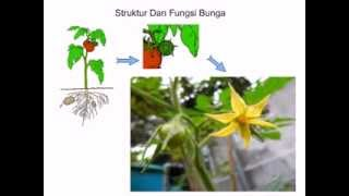 Struktur Pada Tumbuhan Dan Fungsinya