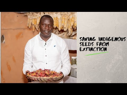 Saving Indigenous Seeds From Extinction