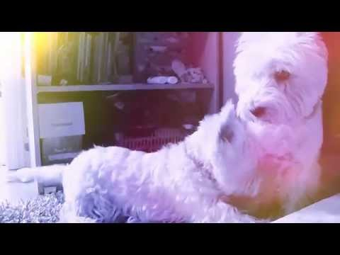 Dog Music Video – Troublemaker