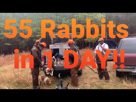 SOUTH CAROLINA Rabbit Round Up ! LAST RABBIT HUNTING MOVIE 20-21 Intro