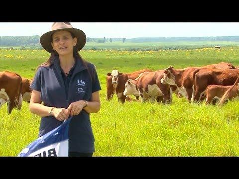 Recomendaciones para productores - Castración de bovinos