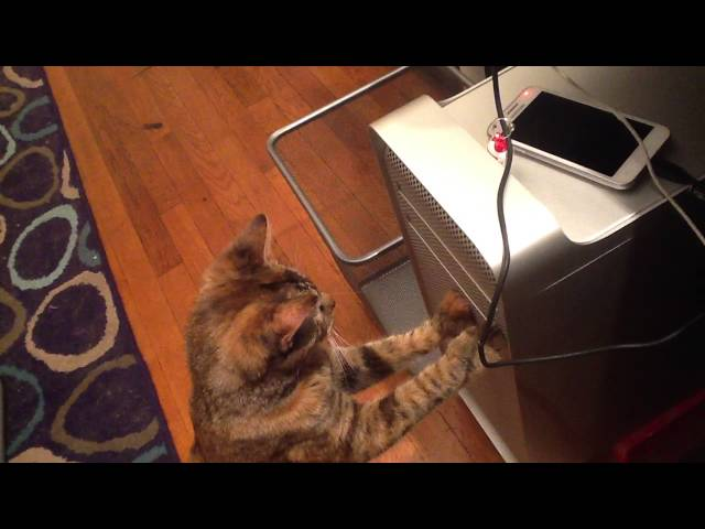 Cat vs CD player.