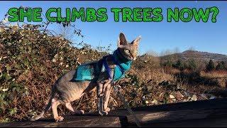 Rue visits a bird sanctuary and climbs a tree