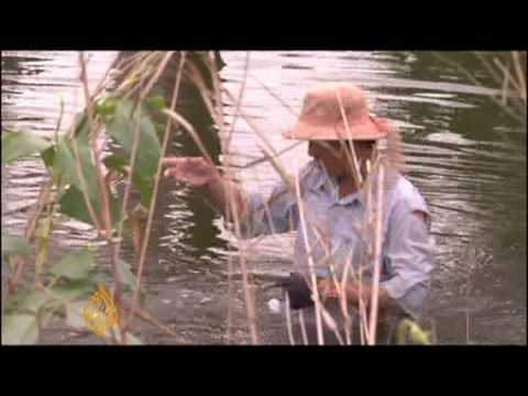 Vietnam farmers benefit from rising sea levels
