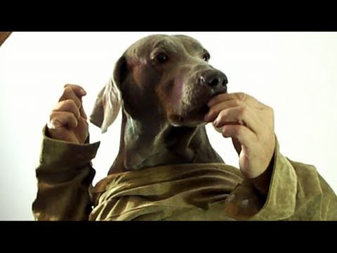 Dog with human hands - photo#48