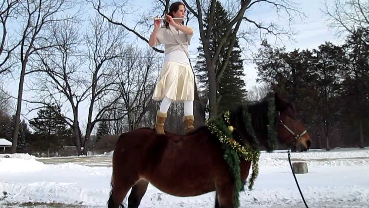 Christmas Decorations For Your Horse : Day danse des mirletones decorating your horse for